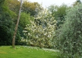 darrynane-gardens