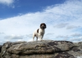 pebbles-on-top-of-the-world