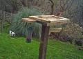 robin-feeding