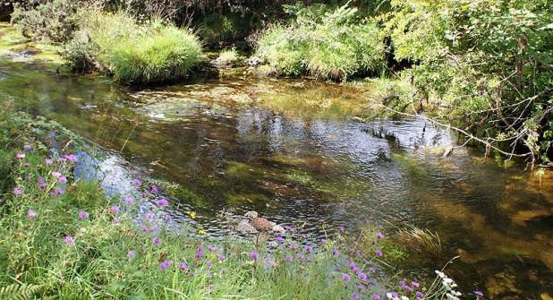 Bodmin-Moor-River
