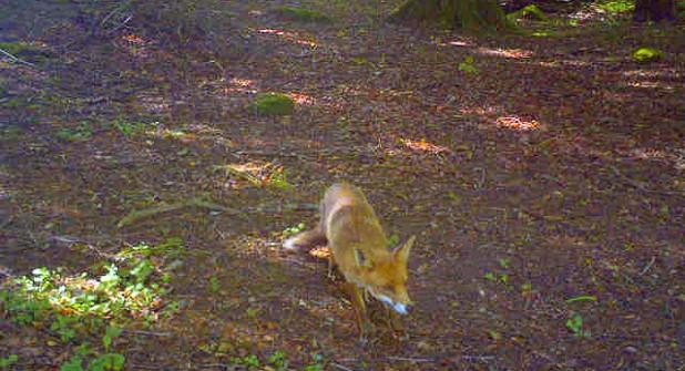 Fox-woods-bodmin