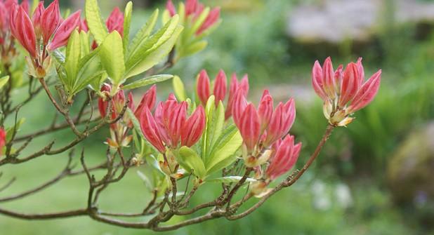 darrynane-flora