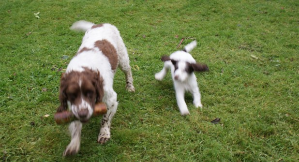 Pup chasing Pebbles!