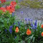 Spring blooms at Darrynane!