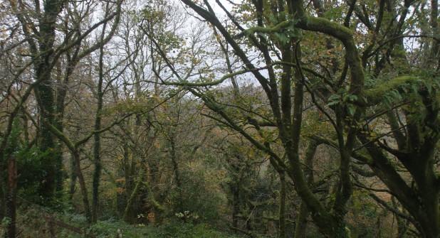 The woods November 2014
