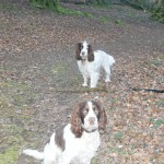 Doggies enjoying the woodland path!