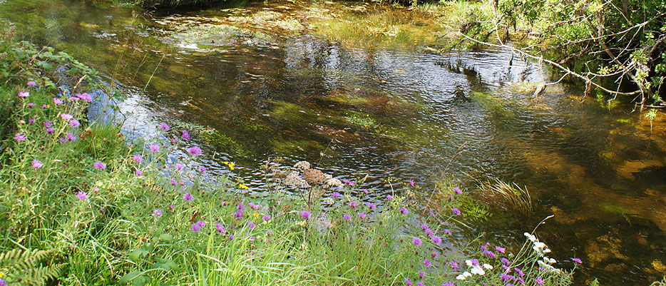 A gentle flowing stream out on Bodmin Moor, not far from Darrynane Cottages