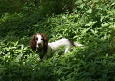 Frodo in the undergrowth