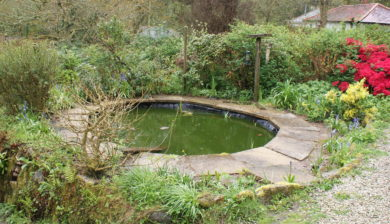 Fish pond after frogs been
