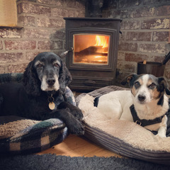 Two four legged guests enjoying their fireside spot.