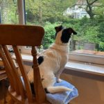 A Lakeside canine guest stirring out of the window from the comfort of a chair, watching the natural world go by!